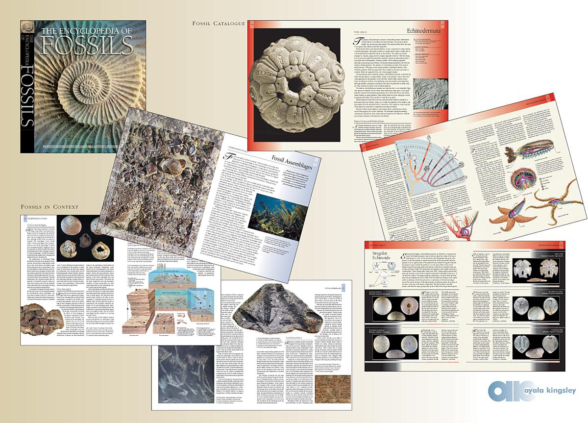 portfolio book layout